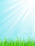 Erba verde sotto i sunrays Immagine Stock Libera da Diritti