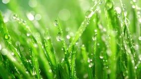 Erba verde sotto la pioggia stock footage