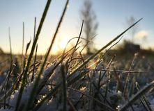 erba verde sotto neve fotografia stock