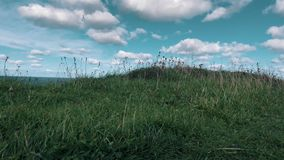 Erba verde sotto vento video d archivio
