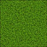 Erba verde, struttura e modello del prato inglese della natura Illustrazione di vettore Immagini Stock