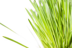 Erba verde su bianco Fotografia Stock
