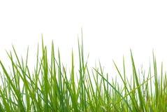 Erba verde su bianco Immagini Stock