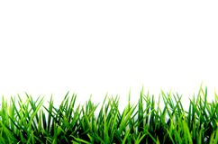 Erba verde su bianco Fotografie Stock Libere da Diritti