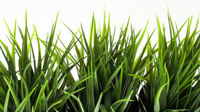 Erba verde su fondo bianco Fotografia Stock Libera da Diritti
