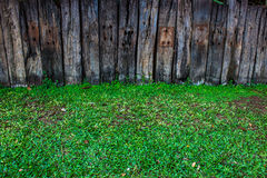 Erba verde su fondo di legno immagini stock