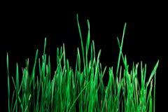 Erba verde su fondo scuro Fotografia Stock Libera da Diritti