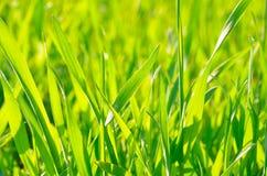 Erba verde su fondo verde alla luce solare fotografie stock libere da diritti
