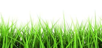 Erba verde su priorità bassa bianca Immagine Stock Libera da Diritti