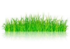 Erba verde su priorità bassa bianca Fotografia Stock Libera da Diritti
