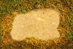 Erba verde su un cemento del fondo nel parco Fotografia Stock