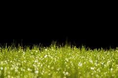 Erba verde su un fondo nero Fotografia Stock Libera da Diritti