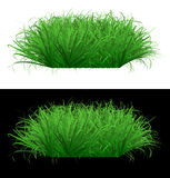 Erba verde succosa su fondo isolato Fotografie Stock