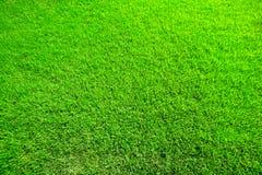 Erba verde sugosa Fotografie Stock