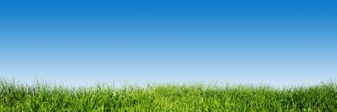 Erba verde sul chiaro cielo blu, panorama della natura della molla Fotografia Stock