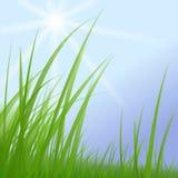 Erba verde sul cielo pieno di sole blu Immagini Stock