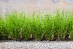 erba verde sul muro di cemento Immagini Stock