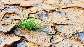 Erba verde sviluppata sulla terra asciutta di inquinamento immagine stock libera da diritti