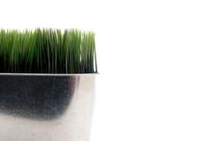 Erba verde in un conta del metallo Fotografia Stock Libera da Diritti