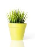 Erba verde in un vaso di fiore giallo isolato su fondo bianco fotografia stock
