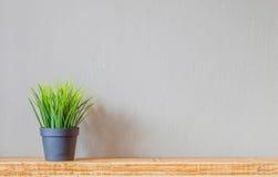 Erba verde in un vaso di plastica nero su uno scaffale di legno contro la parete Fotografie Stock