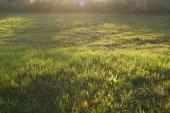 Erba verde in uno schiarimento Il sole uguagliante illumina il prato o il prato immagine stock libera da diritti