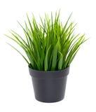 Erba verde in vaso di fiore nero Immagini Stock Libere da Diritti