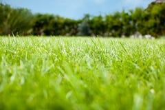 Erba verde verde Fotografie Stock
