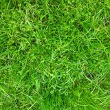 Erba verde verde Fotografia Stock