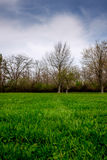 Erba verde verde della casa Immagine Stock Libera da Diritti