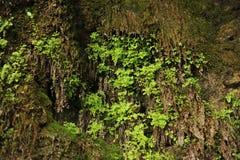 Erba verde vicino al ruscello Fotografia Stock