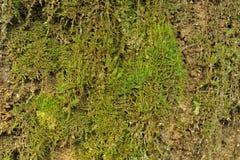 Erba verde vicino alla cascata Fotografia Stock Libera da Diritti