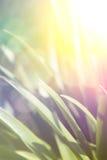 Erba vicina su con retro effetto Fotografia Stock Libera da Diritti