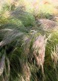 Erbacce che soffiano nel vento Fotografie Stock Libere da Diritti