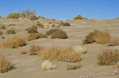 Erbacce da ogni parte delle dune di sabbia del deserto fotografia stock libera da diritti