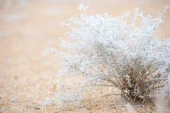 Erbacce del deserto Immagine Stock