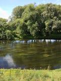 Erbacce del fiume Immagini Stock