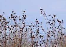 Erbacce 4 di inverno Fotografie Stock