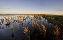 Erbacce e regione paludosa asciutte Saskatchewan fotografie stock libere da diritti