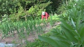 Erbaccia del giardiniere in orto, letto della cipolla video d archivio
