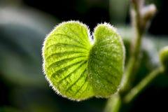 Erbaccia verde Fotografie Stock