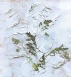 Erbario con le erbe e le foglie verdi del prato di estate Immagini Stock