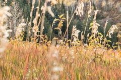 Erbe alpine che cambiano i colori Immagini Stock Libere da Diritti