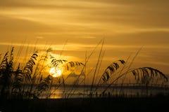 Erbe alte splendide nella priorità alta con l'oceano e tramonto dietro nel Ft Myers Beach, Florida Fotografia Stock