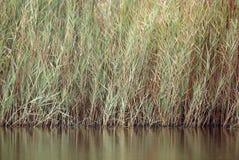 Erbe alte vicino al lago di Buhair, Bahrain Fotografia Stock