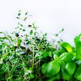 Erbe aromatiche fresche verdi - melissa, menta, timo, basilico, prezzemolo su fondo bianco Struttura del collage dell'insegna dal Fotografie Stock