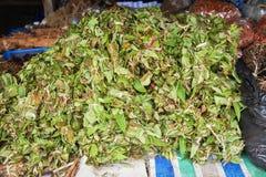 Erbe asciutte della medicina delle foglie di herbals Fotografia Stock Libera da Diritti