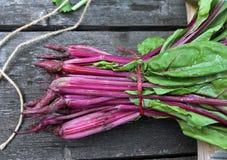 erbe casalinghe fresche per le insalate Fotografia Stock
