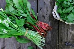 erbe casalinghe fresche per le insalate Immagini Stock