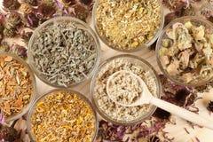 Erbe curative in tazze di vetro, medicina di erbe Immagini Stock Libere da Diritti